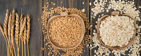 All You Need to Know About the Different Types of Oats